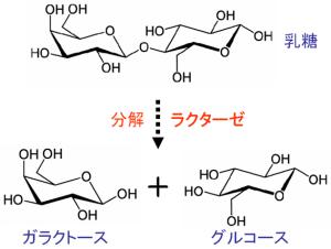 第3回 日本人のカルシウム摂取事情。牛乳を飲んで …